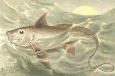 FISH. Chimaera 1896 old antique vintage print picture