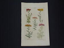 Sir John Hill, Botanical, The Vegetable System 1761-1775 Yarrow #03