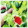 Thumb Watermelon Bonsai Seeds Plants Mini Fruit Flores Tasty Sweet 10pcs/bag
