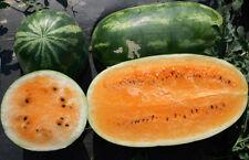 """orange Wassermelone """"Tendersweet"""" - Samen aus biologischem Anbau"""