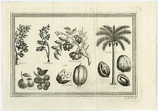 Antique Print-FRUIT-COCOS-COCONUT PALM-TREE-CARAMBES-TARANJA-Schley-Prevost-1767