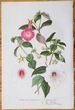 Lemaire Illustration Horticole Gesneria Achimenes Variety - 1855#