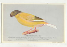Crested Canary Caperns Seed Vintage Plain Back Advert Card Birds US044