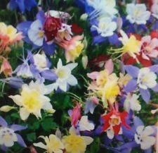 Columbine Giant Mixed Flower Seeds