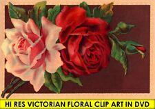 HI RES DVD Vintage VICTORIAN FLORAL CLIPART Ornament Design Illustrations craft