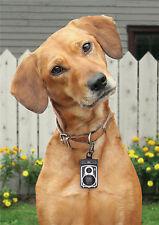 Rolldog Kamera Kotbeutelspender DOIY Hund Kottüten Beutel Tüten Sack