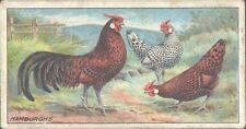 Ogdens - Poultry, 2nd Series - 33 - Hamburghs