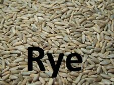 5lb Organic Cereal Rye Whole Grain Berries Clean High Quality Untreated ChemFree