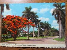 Royal Palm Avenue and Poinciana Tree in Sunny Florida. Curteichcolor