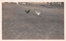 MANDY CLAYTER COLE & MRS SMITH'S ROOSTERS FIGHTING ~CHICKEN~REAL PHOTO POSTCARD