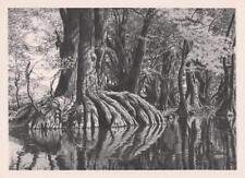 Alan H. Crane Original Lithograph Lot 75