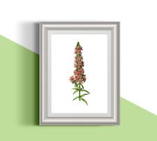 Botanical pink flower 01 illustration A4 print. Nature.