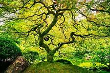 Splendido giardino giapponese tela paesaggio natura #284 qualità Wall Art A1