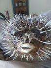 Porcupine Blowfish Puffer fish w/hanger Very Sharp! 6 Inch Real Fish.