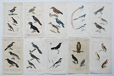 1837 10X GENUINE ANTIQUE CUVIER BIRD PRINTS OWL YELLOW BILL CUCKOO SHRIKE ETC