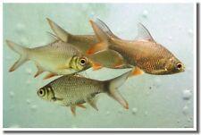 Fish - Aquatic Nature Water Pond Bowl Print NEW POSTER