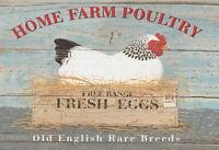 Home Farm Poultry Fresh Eggs Blechschild Schild Tin Sign 20 x 30 cm FA0480