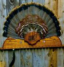 WILD TURKEY HUNTING MOUNT FOR 19 BEARD TAIL HOLDER TROPHY PANEL PLAQUE TAXIDERMY