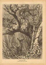Leopard, Stalking Deer, Natural History, Vintage 1882 German Antique Art Print