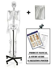 Parco Scientific PB00010-DC Full Size Human Skeleton Life Size with Dust Cover