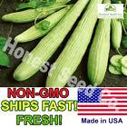 50+ Armenian Yard Long Cucumber Seeds | Non-GMO | Fresh Garden Seeds USA