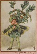 Flower Fairies: The Box Tree Fairy Vintage Print c1930 by Cicely Mary Barker