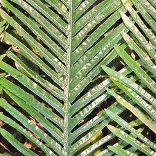 104cm 24pcs Artificial Palm Tree Branch Leaf Frond Wedding Home Patio Sago Decor