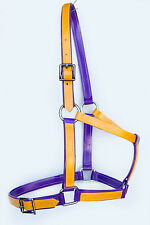 Full Size Halter / Headstall - Purple/Yellow PVC
