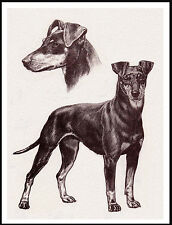 Manchester Terrier Lovely Dog Sketch Print Poster