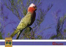 Ansichtskarte: Australien: Galah - Kakadu (Rosenkakadu)
