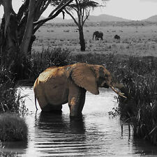 GILLIE AND MARC-direct from the artists-authentic photography print elephant