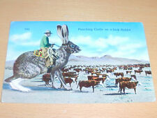 Postkarte : Punching Cattle On A Jack Rabbit - 1963 - sehr selten !!