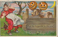 S21 1225 Halloween Postcard Series 980 What Boys Did to Cow c 1910