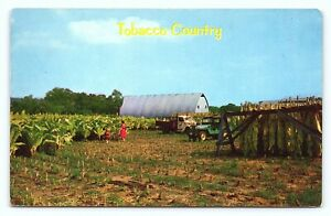 Tobacco Country Cutting in The South & Scaffolding it Occupational Postcard B20