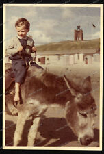 Foto-Mädel-Top Farb foto-Agfa-Girl-Esel reiten-40-50er jahre