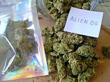 Infusion bien être  Alien OG (Most Wanted Label)