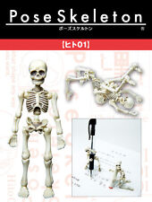 "Re-ment Pose Skeleton "" Human 01"" 1/18 Scale Flexible Skull 3.75"" Holloween Toys"