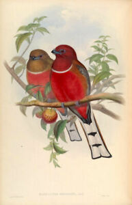 Vintage style birds of A4 Asia prints
