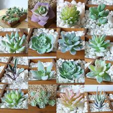 Artificial Succulents Fake Plastic Floral Plant Cactus Garden Home Office Decor