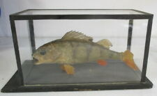 antique botanical model of a fish in glass box