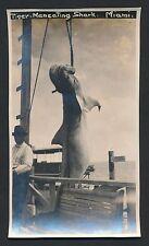 1919 MAN EATING TIGER SHARK Caught Off Miami, Florida Vintage Photo