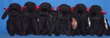 TY LOT of 6 GIGI the DOG BEANIE BABY - MINT with MINT TAGS - 2 LOTS