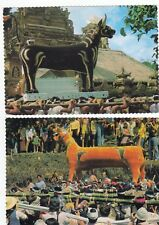 2 Postcards Cremation Rite and Procession In Bali, Indonesia Unused