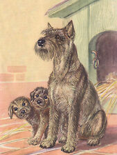 SCHNAUZER MOTHER AND PUPPIES CHARMING DOG GREETINGS NOTE CARD