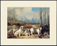 CLUMBER SPANIEL DOGS AND BIRDS LOVELY DOG SHOOTING  PRINT MOUNTED READY TO FRAME