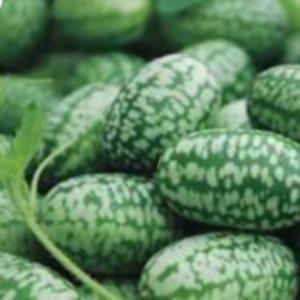 Cucumber - Cucamelon 10-70 Seeds, Mexican Sour Gherkin, Mouse Melon
