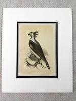 1853 Antico Stampa Arpia Aquila Uccello American Originale Vittoriano Art