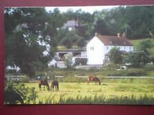 POSTCARD BUCKINGHAMSHIRE MISBOURNE VALLEY  - HORSES IN THE FIELD