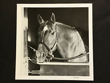 Secretariat 1973 Kentucky Derby Triple Crown  Horse Racing