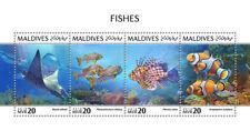 Maldives 2018 Fishes fauna  S201810